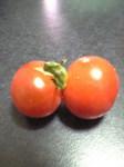 twin_tomato01.jpg